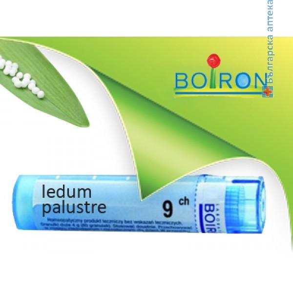 ледум палустре, ledum palustre ch 9, боарон