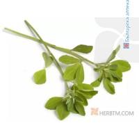 GYMNEMA (leaf) 1x50 g