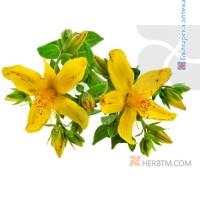 ST JOHN,S WORT FLOWERS 1x100g