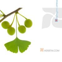 GINKGO BILOBA (leaf) 1x100 g